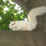 Shaun Moore, Trinity Bellwoods Squirrel, 2008