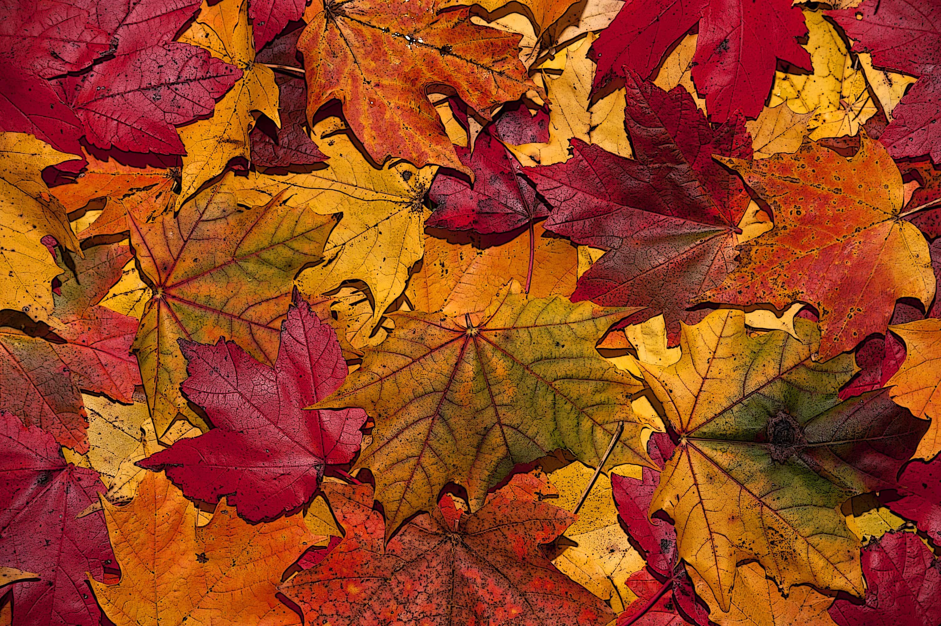 october autumn leaves 2 nkpr pr agency